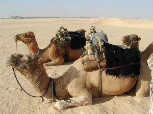 Désert Tunisien