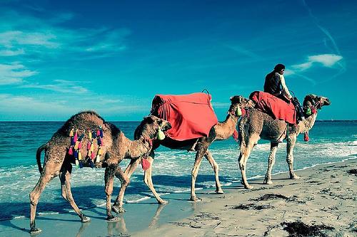 Comment voyager moins cher en Tunisie ?