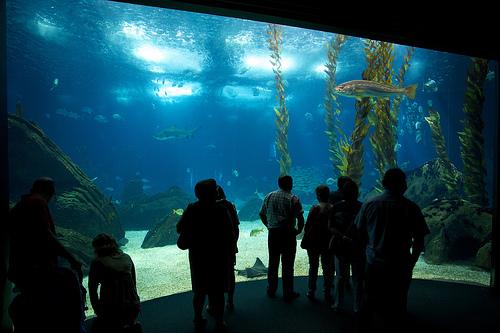 L'oceanarium : un incontournable de Lisbonne