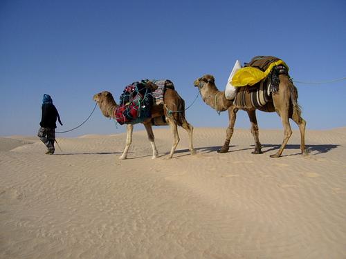 Comment faire une excursion au désert tunisien ?