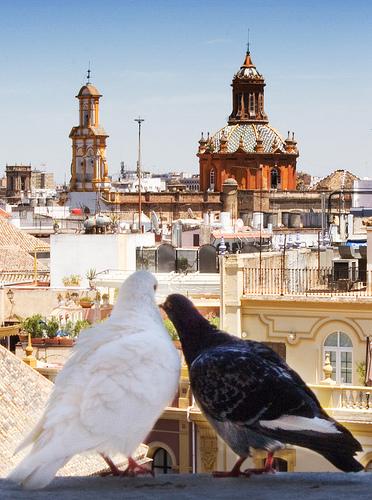 Auberges et pensions à Séville : où en louer et à quel prix ?