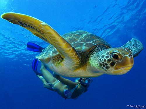 Top 5 des plus beaux sites de plongée en Thaïlande