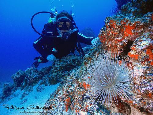 plongee sous marine tenerife